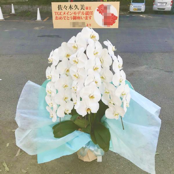 胡蝶蘭3本立ち白